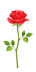 Vector red rose with stem isolated on a white background.