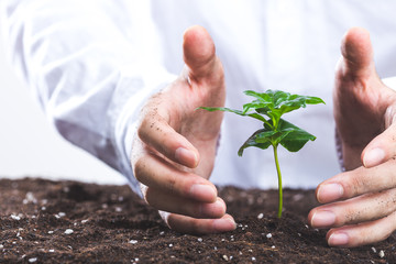 植物を育てる人間の手