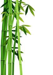bamboo on white