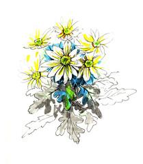 chrysanthemum, graphics, card, Happy Birthday