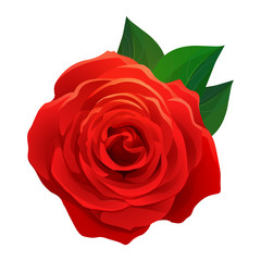 Vector beautiful red rose with green leaves isolated on white background