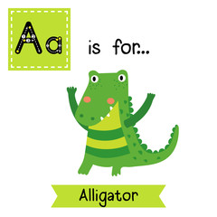 A letter tracing. Standing Alligator. Cute children zoo alphabet flash card. Funny cartoon animal. Kids abc education. Learning English vocabulary. Vector illustration.