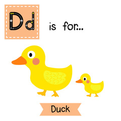D letter tracing. Duck and little duck. Cute children zoo alphabet flash card. Funny cartoon animal. Kids abc education. Learning English vocabulary. Vector illustration.