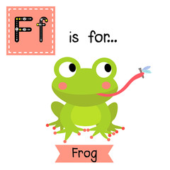 F letter tracing. Frog eating fly Cute children zoo alphabet flash card. Funny cartoon animal. Kids abc education. Learning English vocabulary. Vector illustration.