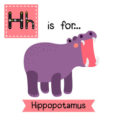H letter tracing. Hippopotamus opening mouth. Cute children zoo alphabet flash card. Funny cartoon animal. Kids abc education. Learning English vocabulary. Vector illustration.
