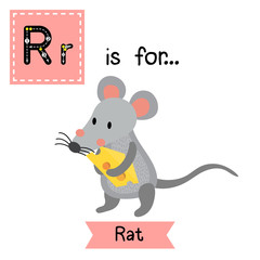 R letter tracing. Rat holding cheese. Cute children zoo alphabet flash card. Funny cartoon animal. Kids abc education. Learning English vocabulary. Vector illustration.
