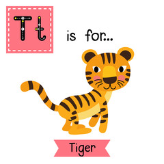 T letter tracing. Jumping Tiger. Cute children zoo alphabet flash card. Funny cartoon animal. Kids abc education. Learning English vocabulary. Vector illustration.