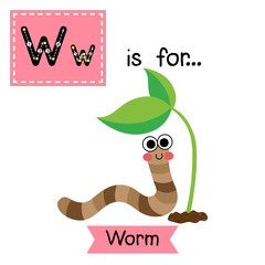 W letter tracing. Happy Worm crawling in the garden. Cute children zoo alphabet flash card. Funny cartoon animal. Kids abc education. Learning English vocabulary. Vector illustration.