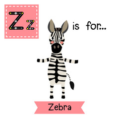 Z letter tracing. Zebra standing on two legs. Cute children zoo alphabet flash card. Funny cartoon animal. Kids abc education. Learning English vocabulary. Vector illustration.