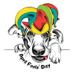 Dog in a april fools' hat. Vector illustration.