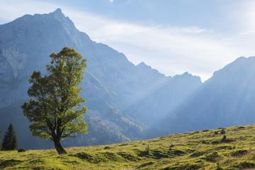 Ahorn in den Alpen