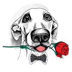 Portrait of a funny dog in tie with red rose. Vector illustration.