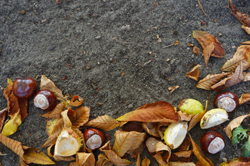 Place for text natural background. Chestnuts in autumn park. Hello, Autumn! Hello October!