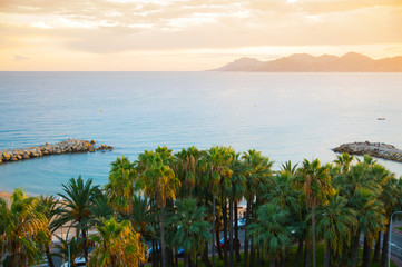 Palms against of sea at sunset. Cannes