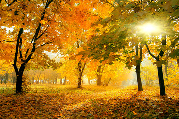 colorful trees in sunny autumn forest. natural b