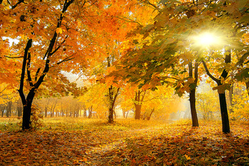 colorful trees in sunny autumn forest. natural background