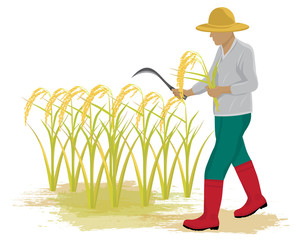 farmer harvest rice vector design