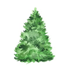 Fir tree. Watercolor illustration, isolated on white