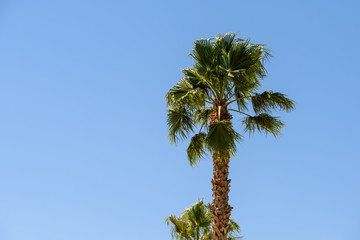 Green Palm Trees On Clear Blue Sky