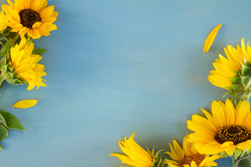 Sunflowers on blue, copy space on blue wooden background, op view