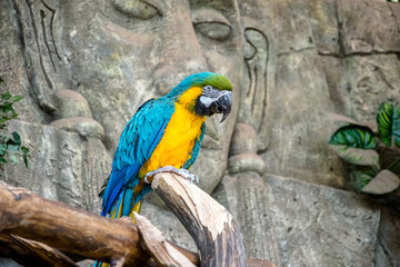 Blue-and-yellow macaw sitting on a branch