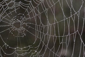 Spider web with drops in the morning forest. Macro shot.