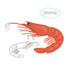 Royal red shrimp set with caption. Isolated illustration on white background. Seafood symbol. Vector illustration.