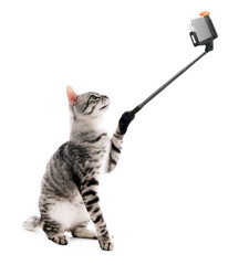 Funny cat taking selfie on white background.