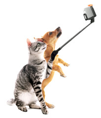 Funny cat and puppy taking selfie on white background.