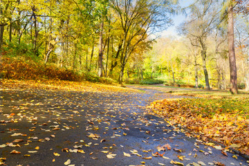 road in fallpark with golden leaves at sunny day