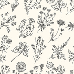 Wild flowers and herbs. Seamless floral pattern. Vector vintage illustration.