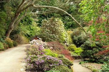 Azalea and Rhodedendron under Eucalyptus