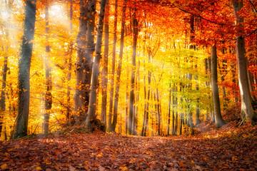 Wall Mural - Wald im Herbst mit Sonnenlicht