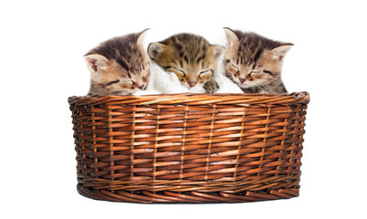 sleeping kitten in the basket