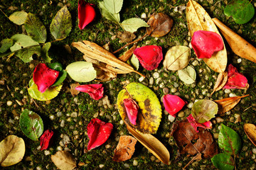 Fallen Petals and Leaves on Ground with Moss