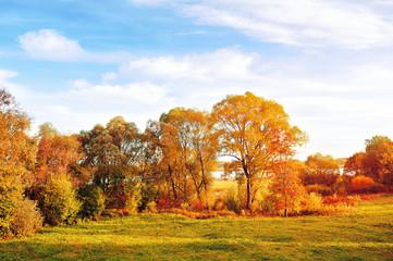 Sunset autumn view of autumn park lit by sinlight. Autumn nature landscape-yellowed autumn park in autumn sunlight