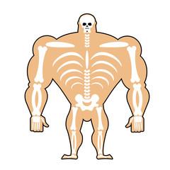 human structure. Skeleton men. construction of athlete. Bones an