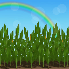 lawn with corn and  rainbow