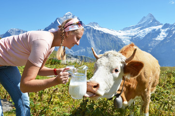 Wall Mural - Girl with a jug of milk and a cow. Jungfrau region, Switzerland