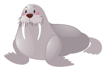 Cute walrus on white background