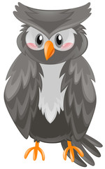 Owl with black feather