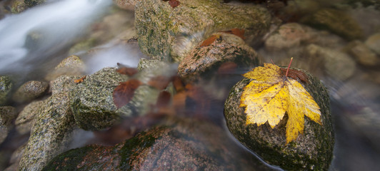 Autumn river with foliage on the rocks