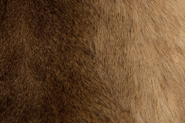 animal fur texture for background Wall mural