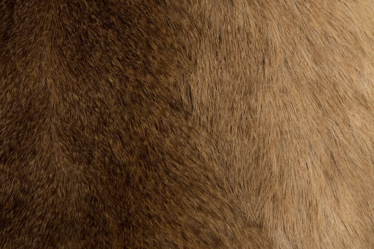 animal fur texture for background