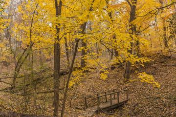 Autumn woods & wooden footbridge