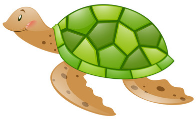 Turtle with green shell