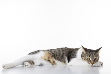 lazy cat sleepy on white table