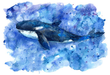 Big Blue Killer Whale and water.Watercolor hand drawn illustration. Realistic underwater animal art.
