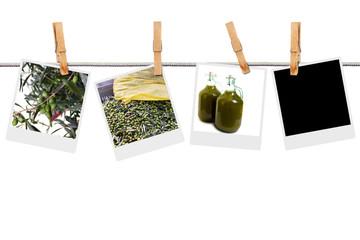 Raccolta olive e produzione olio d'oliva