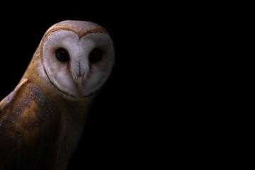 common barn owl in the dark Fototapete